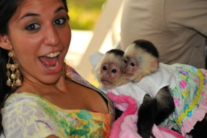 gorgeous 2 Capuchin s for new home
