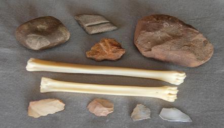 Animal fossils, horns, tusks,skulls, trilobites and bones fo