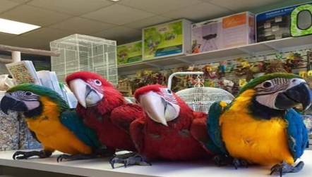macaws for sale whatsapp 00237698000535
