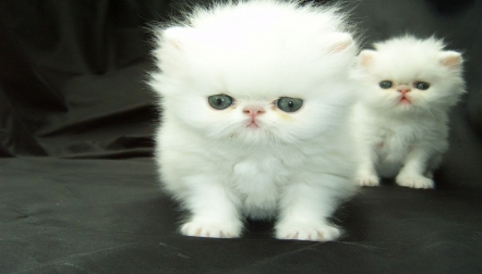 Lovely kittens available for adoption,