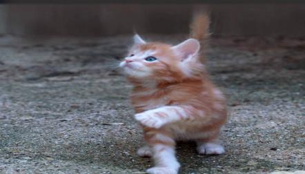 HandRaised Ragdoll Kittens (+971523440048)