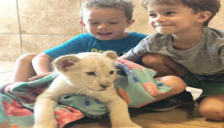 White Lion Cubs for sale