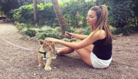 Healthy Tiger Cubs for sale