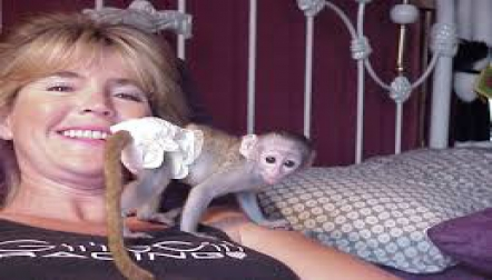 Two Baby Capuchin s now available for new homes
